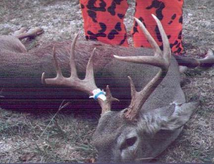 [Loy Kyle took this nice 11 pt buck on his place in Del Rio]
